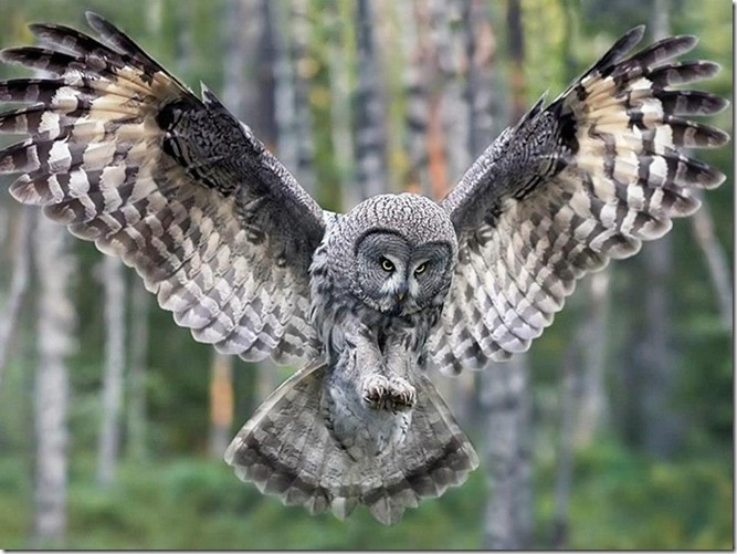 OwlLove