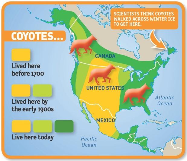 coyoteMap