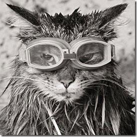 CatzGlasses