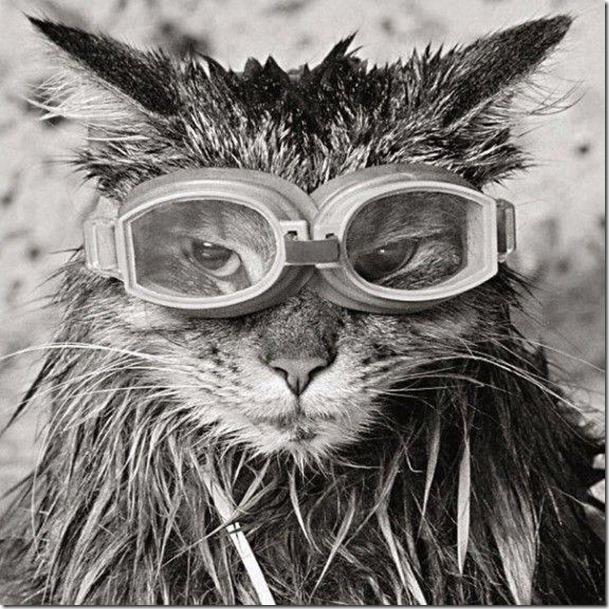 GlassesCat