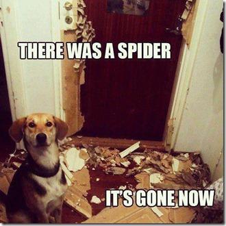 spiderScare